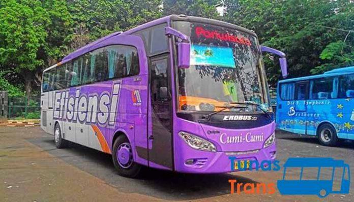 Daftar Harga Sewa Bus Pariwisata di Tuban Murah Terbaik